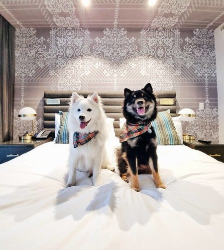 Dog Friendly Hotels In Las Vegas The Cosmopolitan